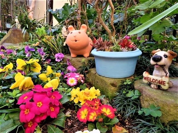 3⃣🌻花壇の中は色とりどりの花が揃い、負けずと多肉たちの寄せ植え鉢を並べてみた...み
