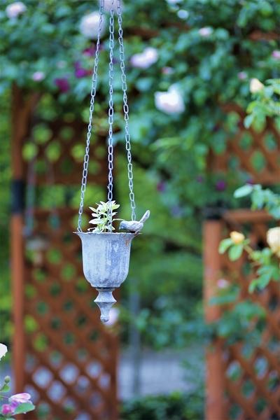 バードフィーダーに葉物を入れてアーチの中央から吊るしてあります。 背景のパーゴラ