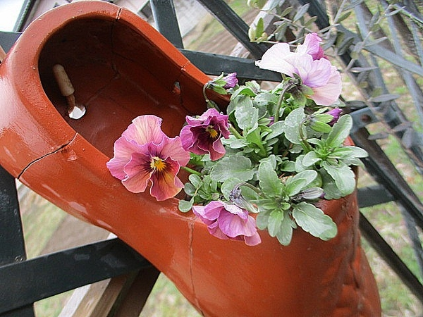 8/10頃の種まき なごみももか しんしん フリフリとグラデーションが楽しめます この冬