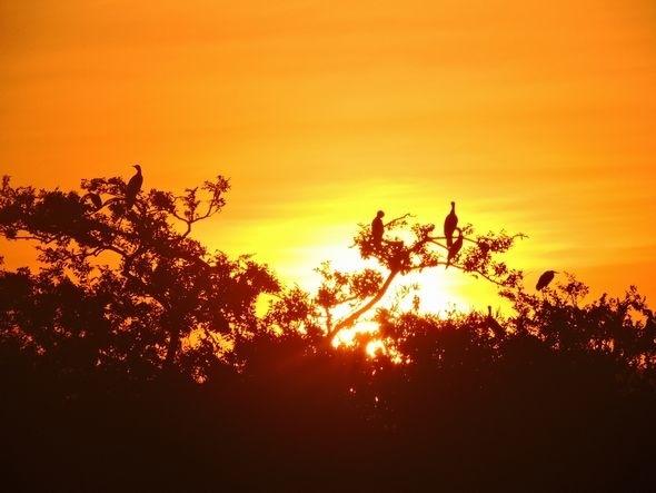 日の出とカワウ  2019.08.12 早朝・河口公園