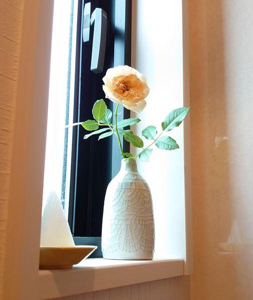 今日のトイレの窓のお花は、薔薇のあかり🌹 カットしたのを庭に落っことしていたのを気