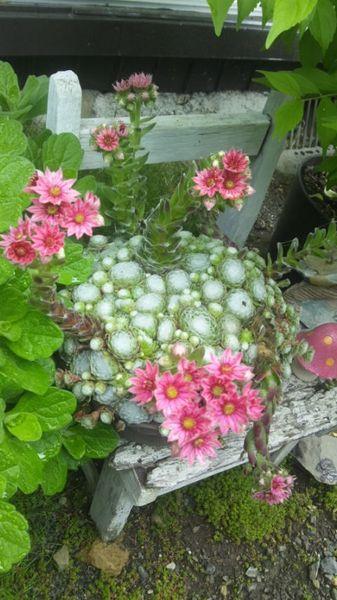 古いイスの上の、巻絹の花。