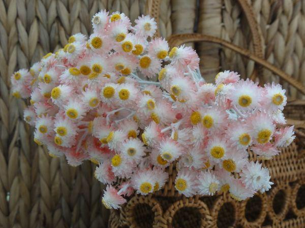 ヘリクリサムルビークラスター 丹精込めて育てた美しい花を残しておきたい。 逆さに吊