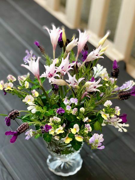 春咲グラジオラス ピュアベール 切って飾るとキレイでしょ✨ お庭に咲いた💝お花アレン