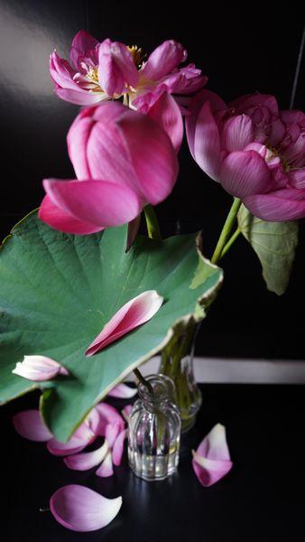 タイトル:「撮影後」 花材:花蓮 花器:ダイソー