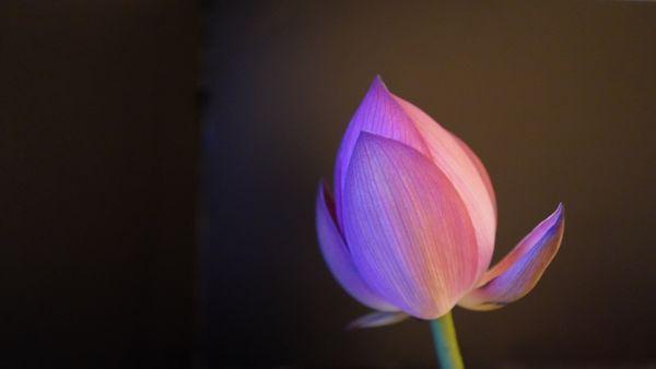 タイトル:「はじまりの蕾」 花材:花蓮 花器:ペットボトル