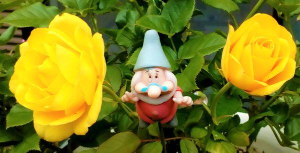 新たに開花し始めた黄色い『ミニバラ🌹』😄  バラからパワーを貰いましょう💪  帰宅後の