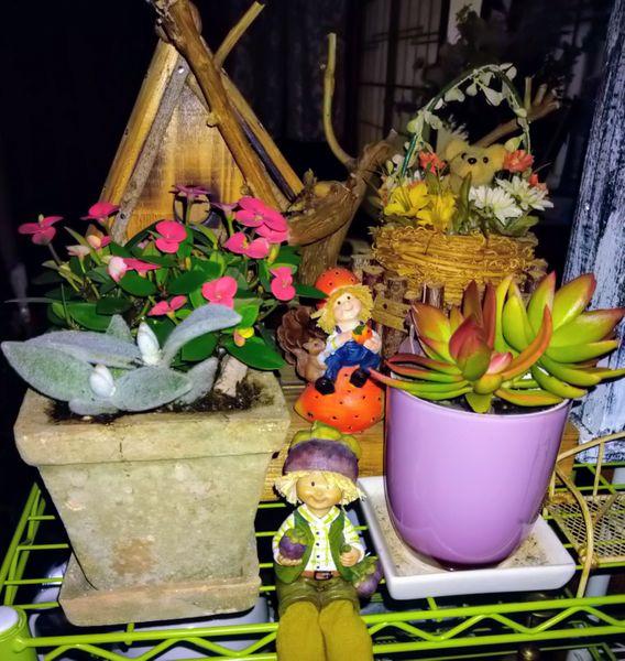 ユーフォルビア(多肉植物)の写真 by KOJIN 先輩の仲間たちと一緒に🤗