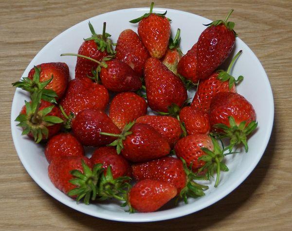 収穫4/30 章姫イチゴの粒が揃ってきました。