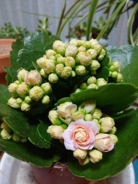 葉っぱの形、可愛い花に一目惚れ たくさんの花の種類、色があります。 今回は、薄ピン