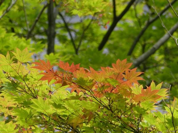 四季の風景写真 「なつ」 photo@ma #花 #公園 #散歩 #山歩き #自然