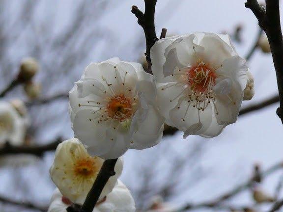 四季の風景写真「ふゆ」 photo@ma  #花 #散歩 #自然#公園 #植物園 #風景