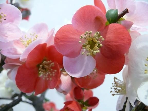 四季の風景写真「はる」 photo@ma  #花 #散歩 #自然 #公園 #植物園 #風景