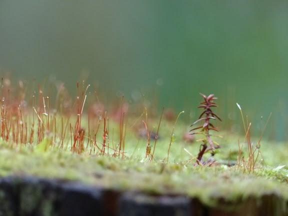 四季の風景写真「はる」 photo@ma  #花 #散歩 #自然 #公園 #植物園 #風景 #粟島