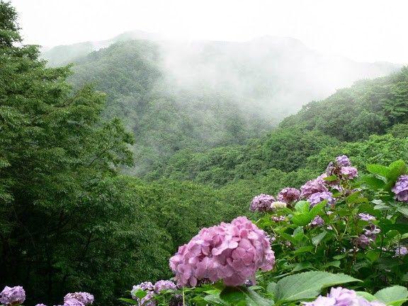 四季の風景写真「なつ」 photo@ma  #花 #散歩 #自然 #公園 #植物園 #風景 #新潟 #植物