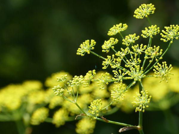 四季の風景写真「なつ」 photo@ma   #花 #散歩 #自然 #公園 #植物園 #風景 #新潟 #植