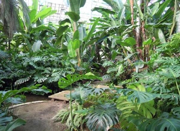 【植物園日記】白浜フラワーパークの植物園日記がスタート!