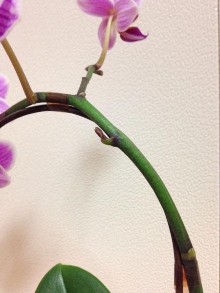 花茎から出ているものは…?