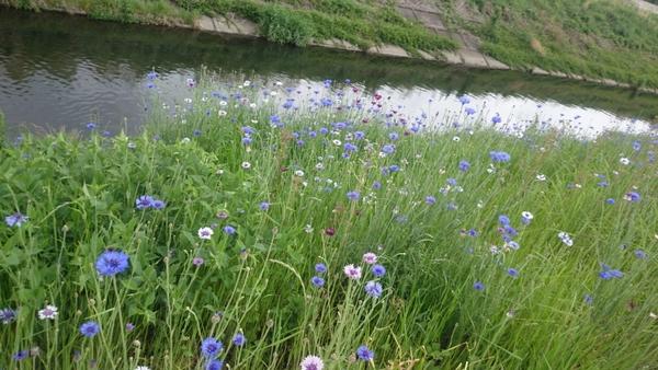 散歩中~の草花。