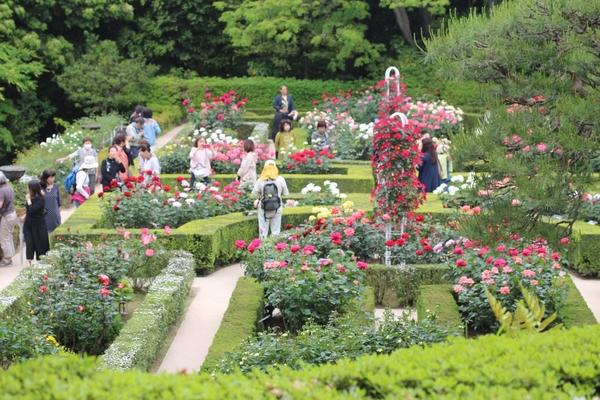 旧古河庭園のバラ園[i:146]
