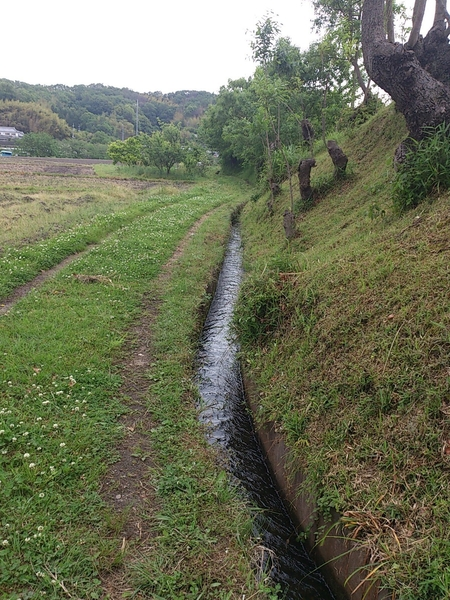 水路草刈り