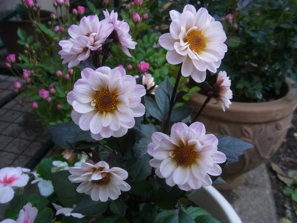 お花の様子