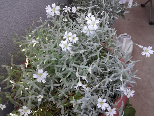 この花の名前、何でしょう?
