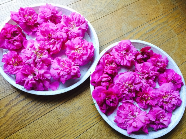 バラとクレマチス開花