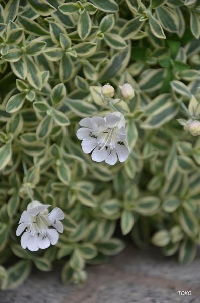 現在開花している植物から…その6