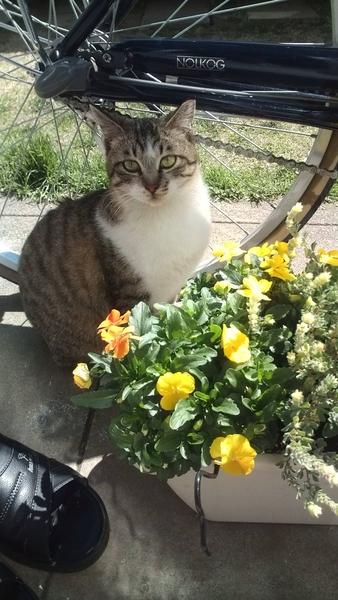 ネコと花。(=^^=)v
