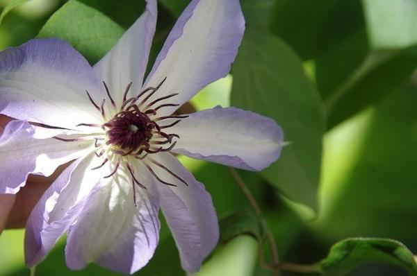 いろいろな庭の花