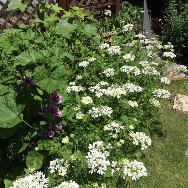 オルラヤの庭