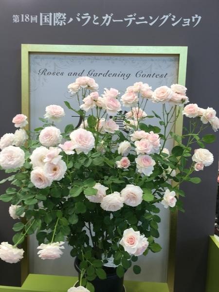 🌹国際バラとガーデニングショウ2016