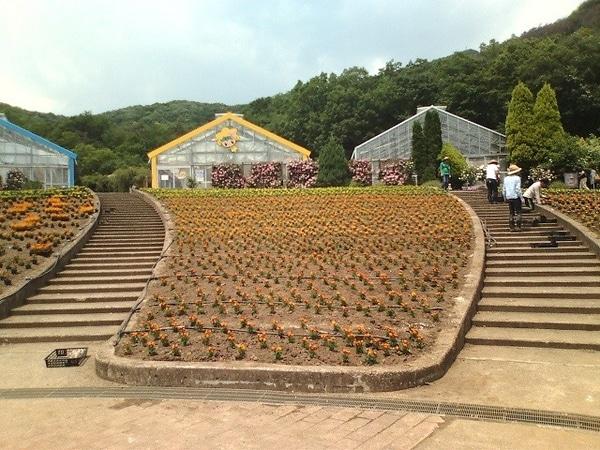 大花壇植栽