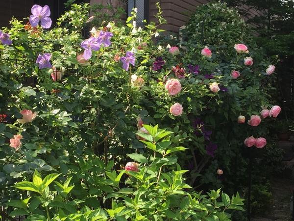 ピエールの周辺に咲く花