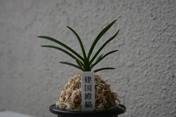 我が家の蘭に変化が・・・②