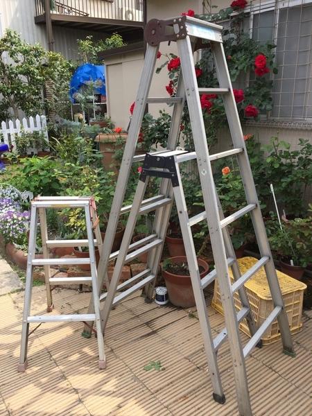午前の庭作業