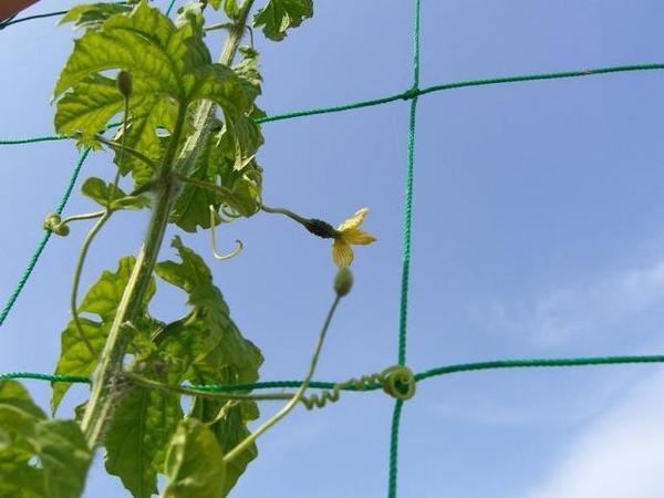 新潟県立植物園…さすがに暑い!