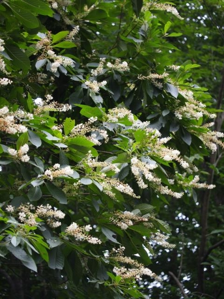高城山の夏の花