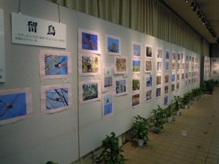東山で見られる野鳥写真展