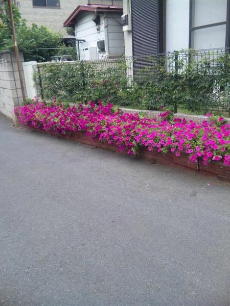 前の家の花壇