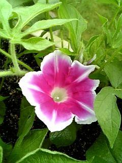 咲きました(●^o^●)♪