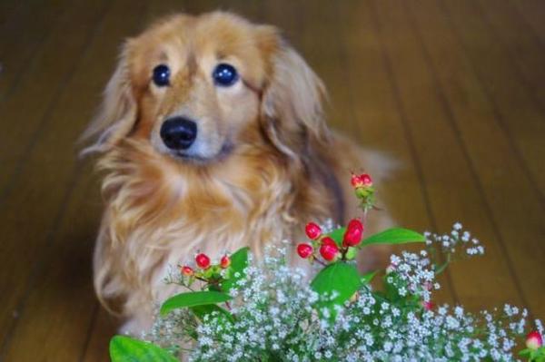 花と今日のワンコ