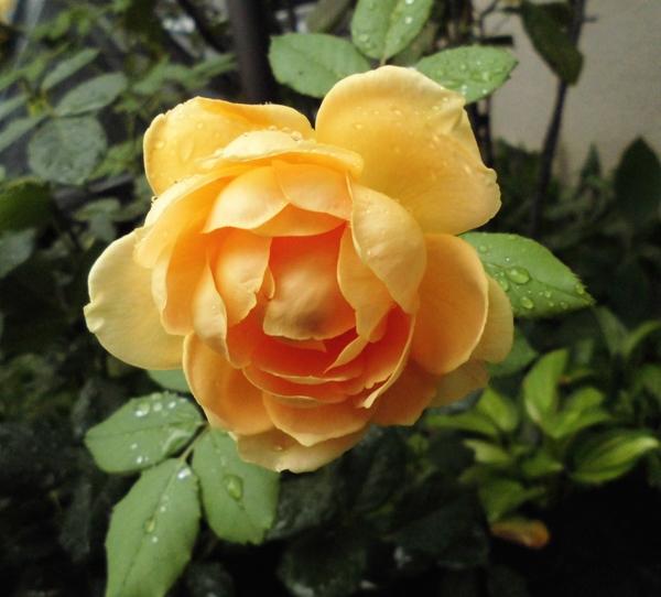 花 みっつ♪