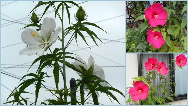 色んなお花♪