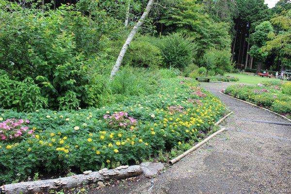 秩父宮記念公園の7月の花々