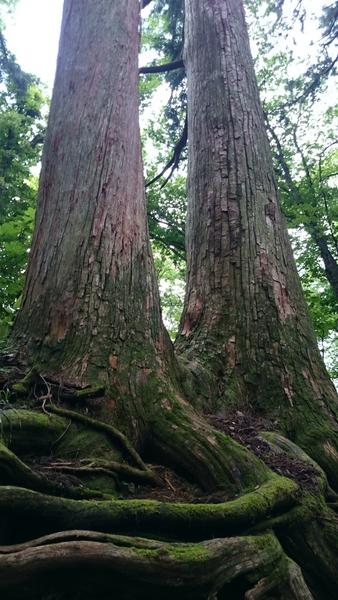 大木にエネルギーを頂く(*^.^*)