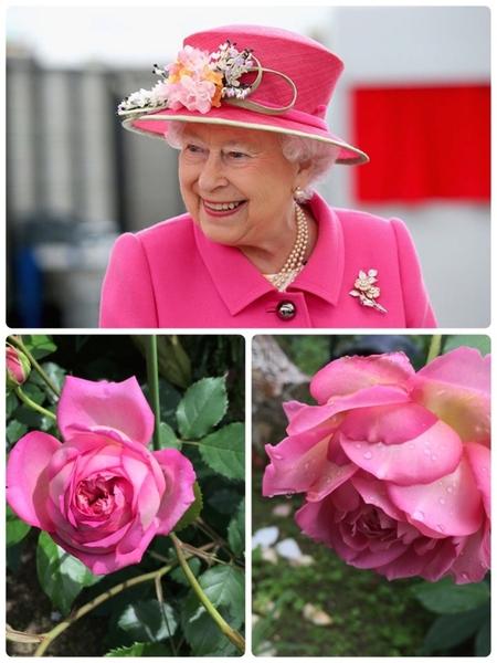 エリザベス女王&ジュビリーのために♥