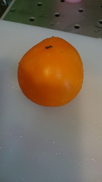 柿!?  (・_・?)  いいえ!