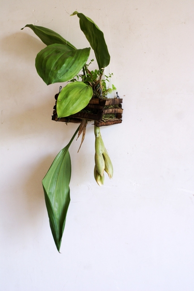 なかなか咲かないスタンポッペア
